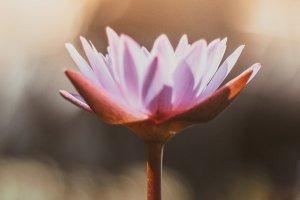 Вокруг света за 1,5 часа: отправляйтесь в СПА-путешествие с Beauty Story